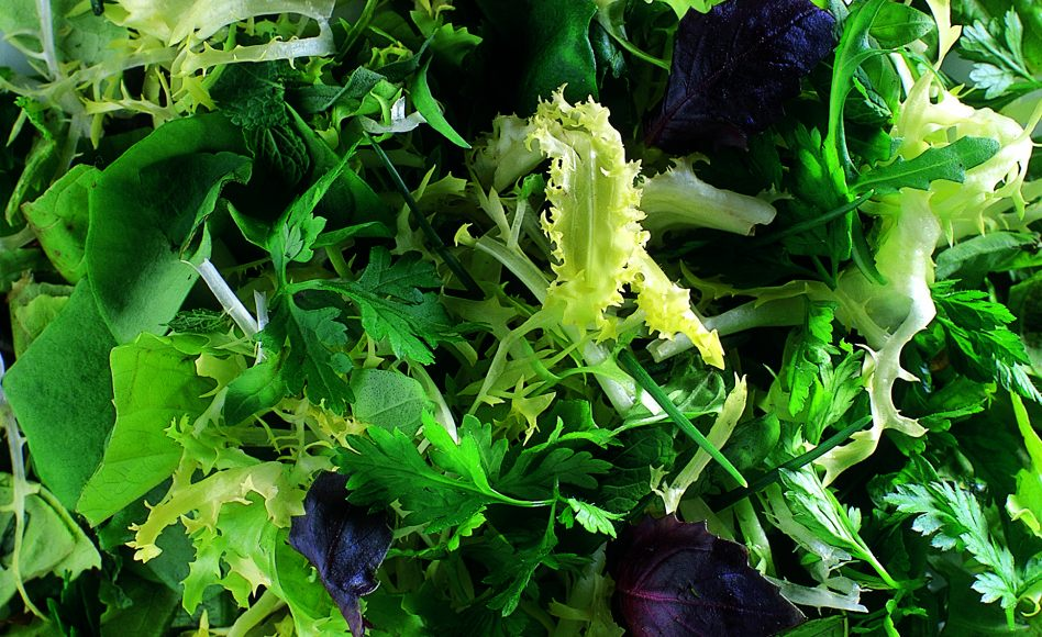 Mixed Summer Herb and Lettuce Salad